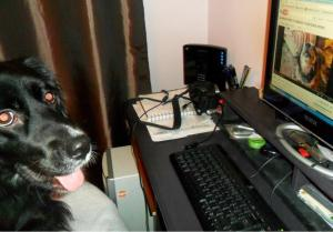 dogputer