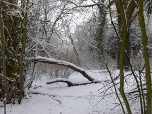 snow dog 048