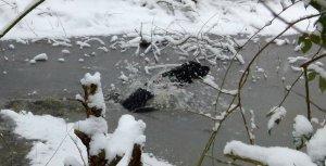snow dog 0551