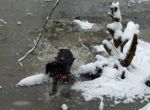 snow dog 0561