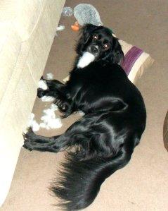 Lesser bearded stuffing hound