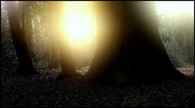First Light in the Forest by Matt Baldwin-Ives