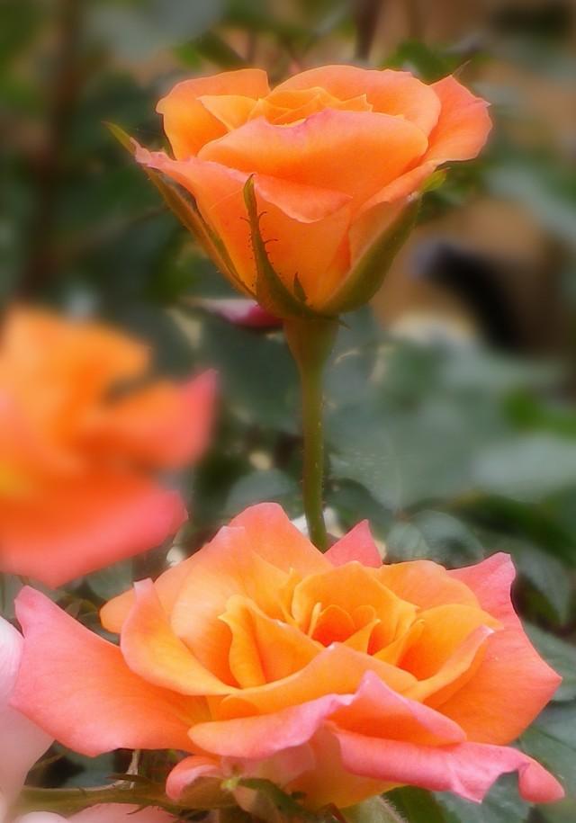 gardenand stuff 4701