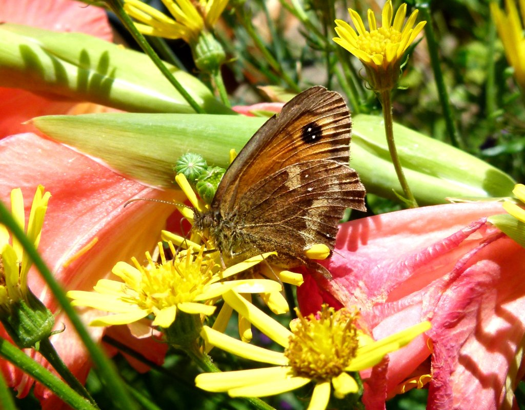 Butterfly in the wild flowers