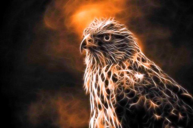 digital hawk