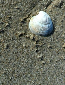 just a shell