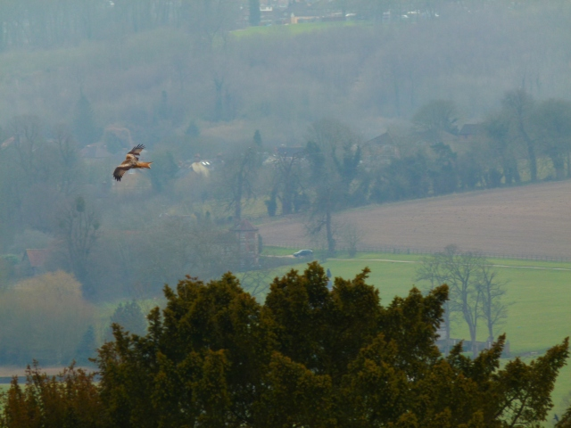 Red kite over West Wycombe