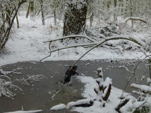 snow dog 054