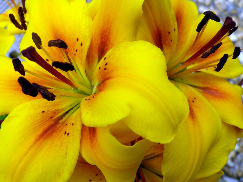 gardenand stuff 4712