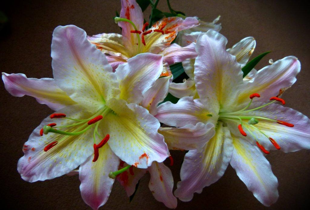 lilies 014