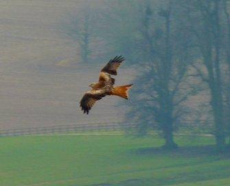 kites 258