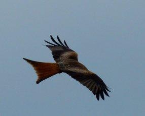 kites 334