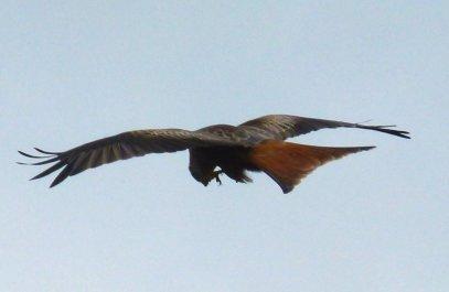 kites 356