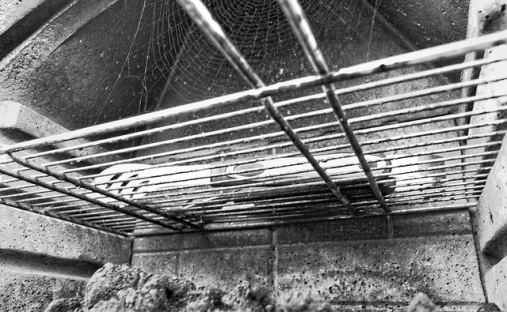 Grill  and spiderweb by Nick Verron