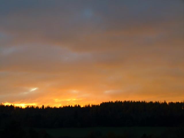 november hawk orc 085