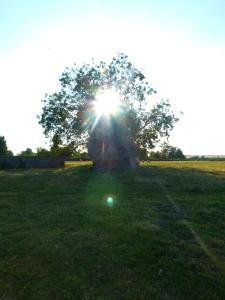 Avebury (29)