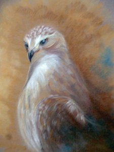 Hestias hawk lg1
