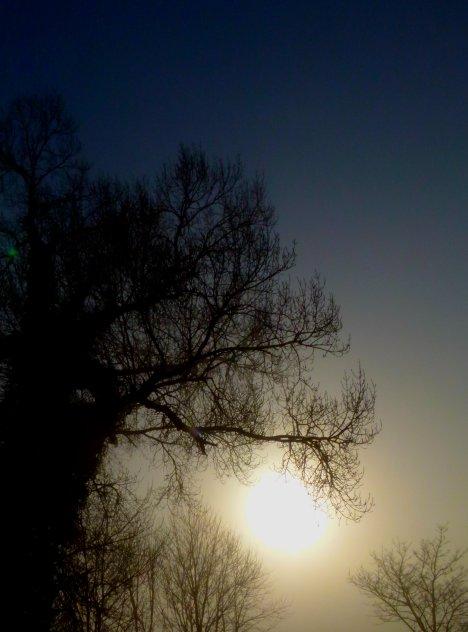 fog 0121