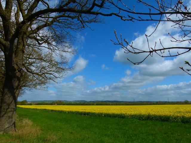 fields 003