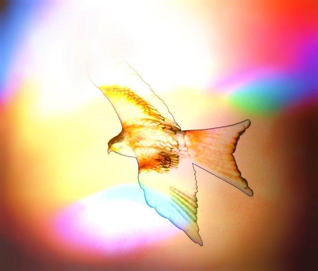 kites 409_DxO1