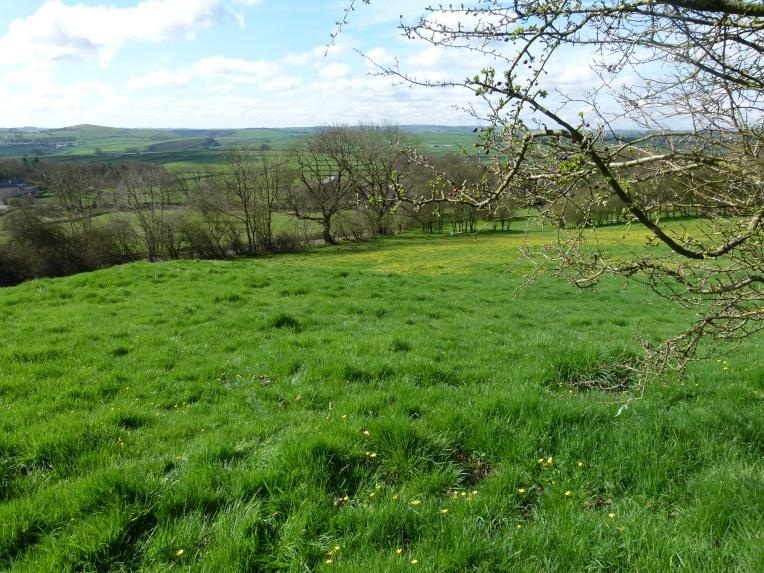 Our hillside