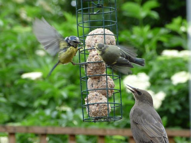 birds test pics 058
