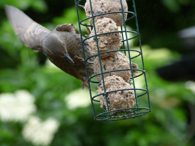 birds test pics 099