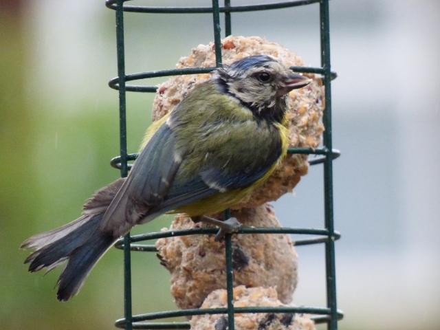 birds test pics 235