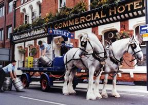 tetley-drayhorses-reduced