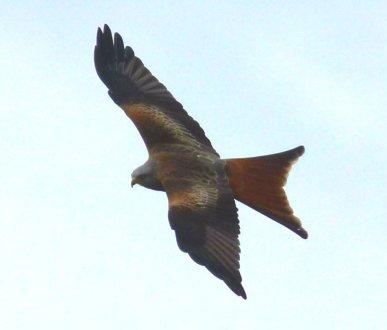 kites 409