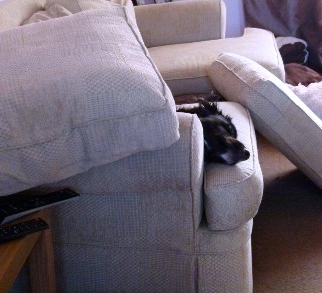 ani and the sofa cushions (1)