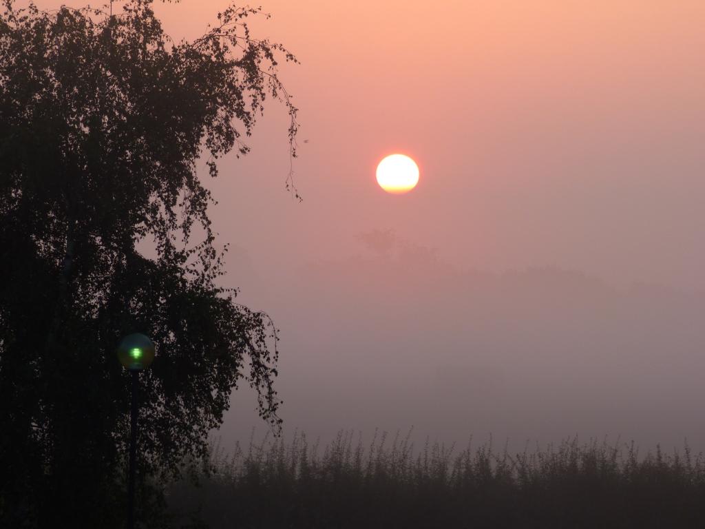 dawn 008