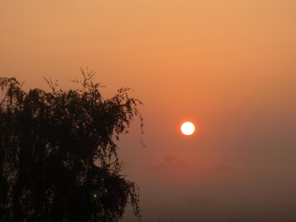 dawn 022