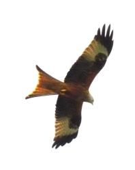kites 327_DxO
