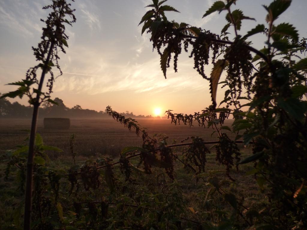 sunrise 022