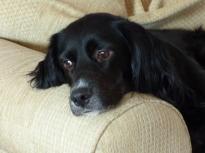 watchdog (2)