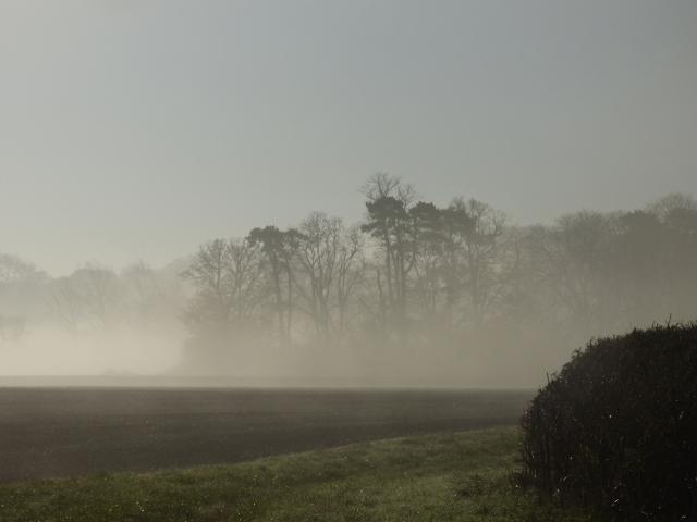 foggy morning 004