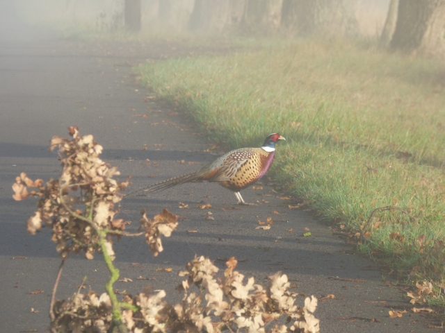 foggy morning 011