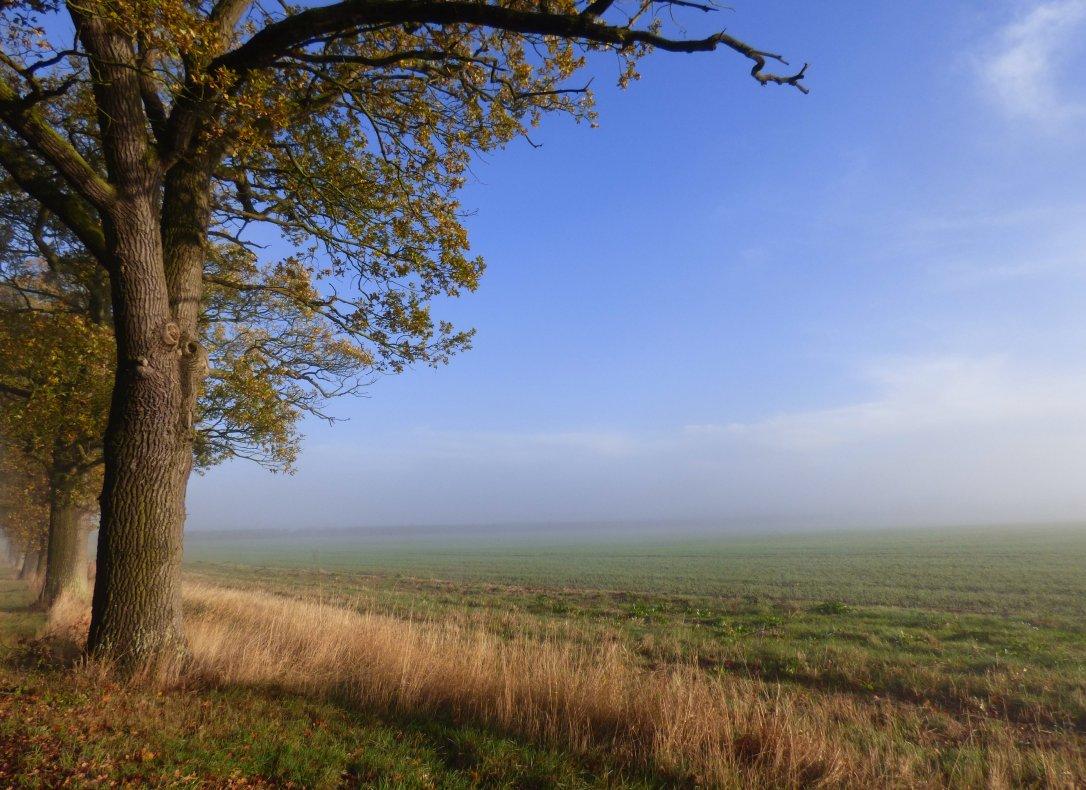 foggy morning 014
