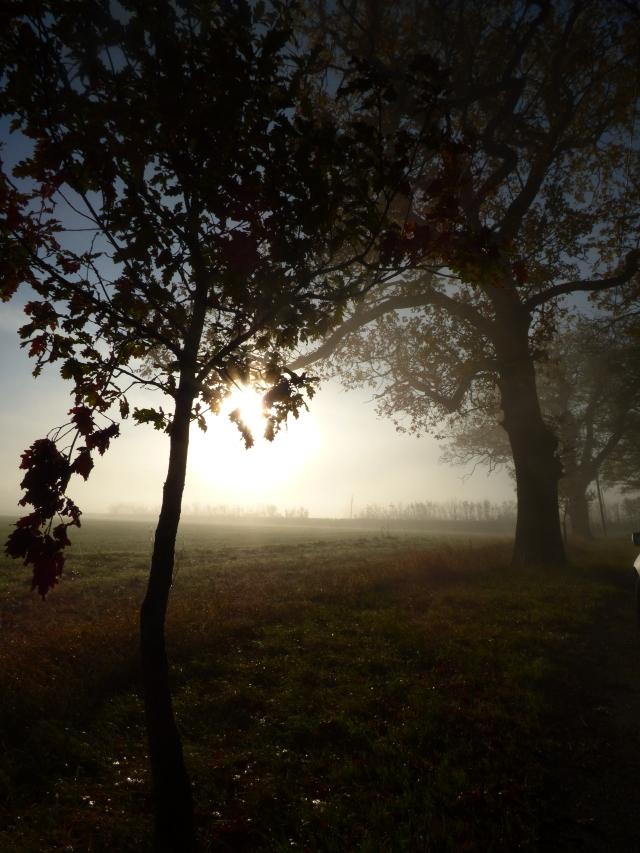 foggy morning 018