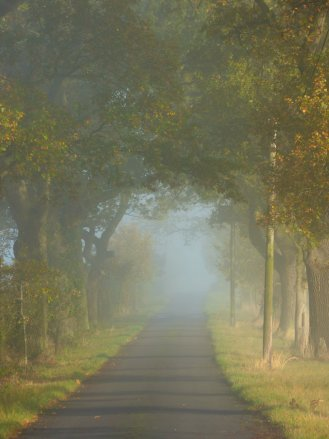 This image has an empty alt attribute; its file name is foggy-morning-019.jpg