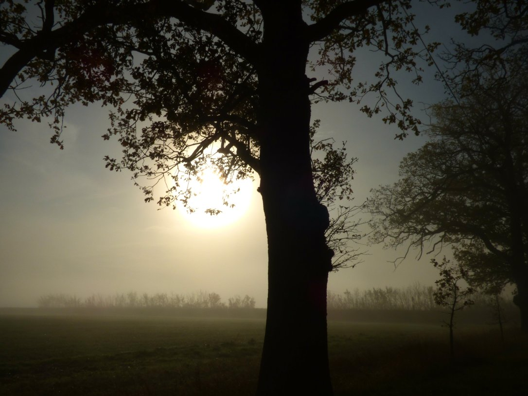 foggy morning 021