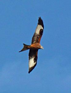 more kites 001