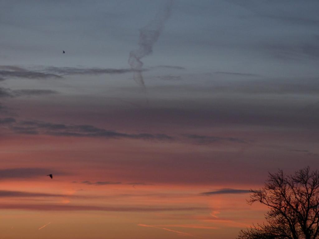 pre dawn 015