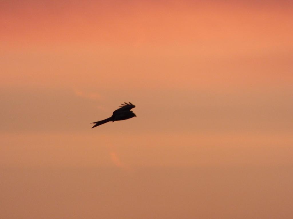 pre dawn 079