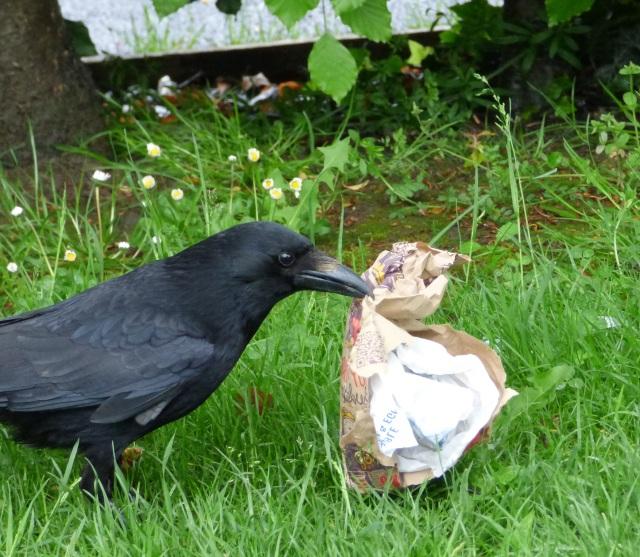 fast food raven (4)