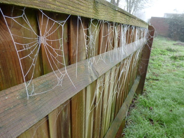 fence festooned in frozen cobwebs