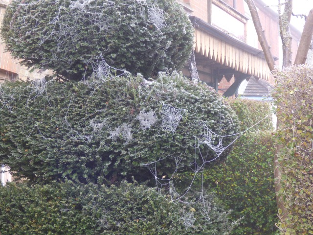 cobwebs on tree