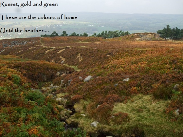 Russet, gold and green These are the colours of home Until the heather…