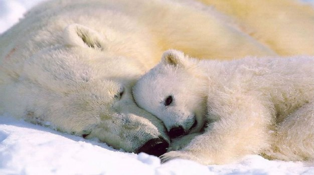 Image: www.lovethesepics.com